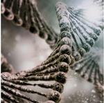 Active ton ADN
